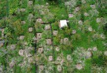 Một góc vườn sầu riêng 6.500 m2 của ông Lê Văn Thôi cây rụng lá, cành bạc trắng. Ảnh: Hoàng Nam